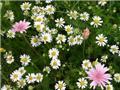 Melange fleurs Roccoco N°6 - 100 G