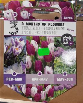 Bulbes mix 3 mois floraison Pourpre  (VT) ** A planter en automne **