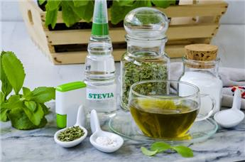Stevia rebaudiana Pot C1.5  ** Edulcorant de sucre végétal **
