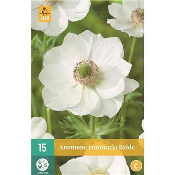 Anemone coronaria Bride  * 15 Pc Cal. 5/6