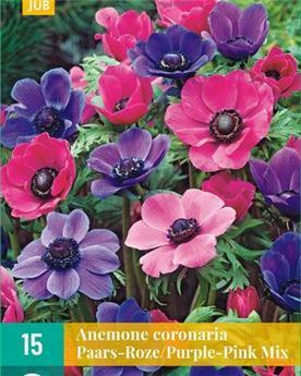 Anemone coronaria Pourpre Rose * 15 Pc Cal. 5/6