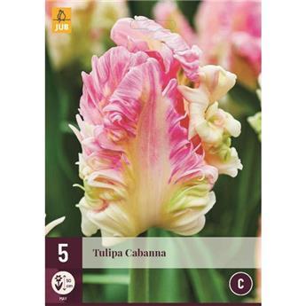 Tulipe Cabanna * 7 pc cal.11/12