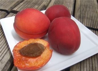 Abricotier Rouge du Roussillon Buisson Pot C7.5