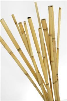 Tuteur bambou 150 cm D 12 14 mm  / 4 pc