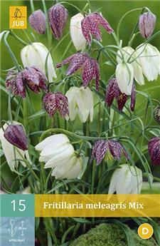 Fritillaria Meleagris Mix 5 PC / POT