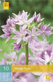 Allium Eros 5/+ X 10 pc
