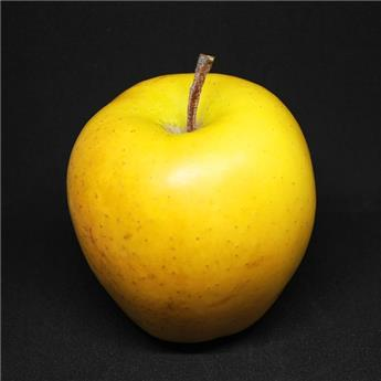 POMMIER Golden delicious C.15L Palissé Verrier