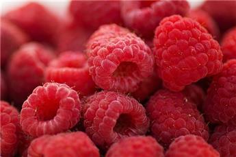 Framboisier Boheme Pot C2 ** Fructifie de juin au gel **