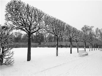 Tilia europaea Pallida Haute Tige Palissé 40 45 * Tronc 140 cm ** Plante exceptionnelle **