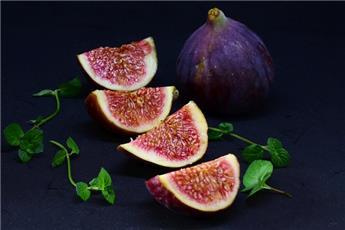 Ficus carica Rouge de Bordeaux Buisson Pot C2 jeune ** Unifère **