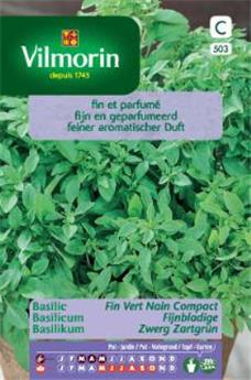 Basilic Fin Vert Compact  (Vilm)