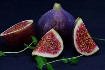 Ficus carica Violette de Sollies Tige 90 cm Pot C12  ** Unifère **