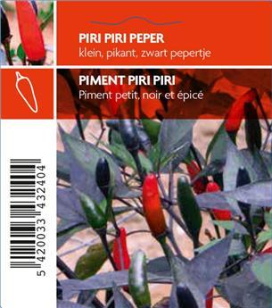 Piment Piri Piri Zimbabwe Black P10.5 cm