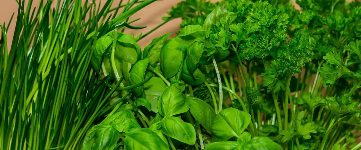 Nos plantes aromatiques sont disponibles