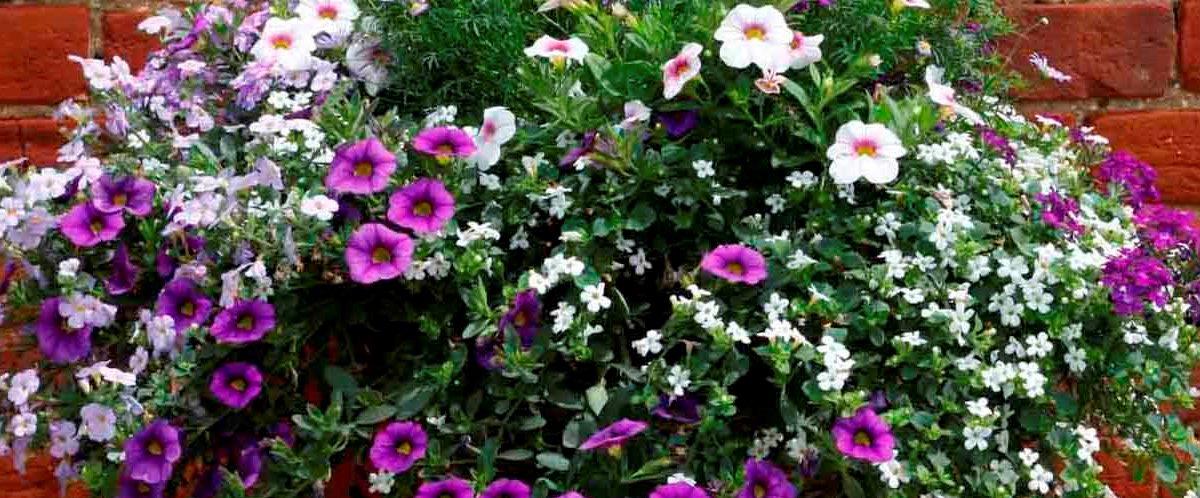 Notre assortiment de plantes annuelles est ponibles.